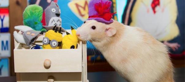 彼の名はマーティン。ネズミとネコとミニチュアの世界に癒される