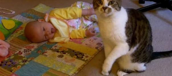 【今日のにゃんこ】子育ては初めてにゃ。不器用だけど赤ちゃんの世話をする「ワトソンくん」