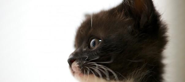 【まとめ読み】2014年CuRAZYで人気があった「ネコ」ベスト10