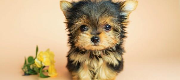 犬「必死です」可愛さのあまり注意できない犬のドジな行動9選