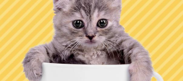 超マイペース。ティーカップサイズのネコがのんびりでかわいい(01:40)