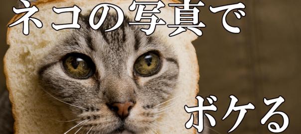 【飼い主見てて!】ネコの写真でボケてみた14選