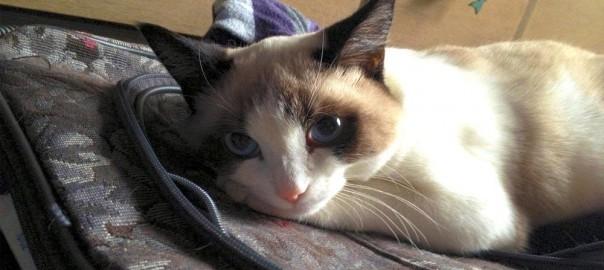 【今日のにゃんこ】写真は可愛く写りたい!キメ顔が得意なネコ「バクスターちゃん」