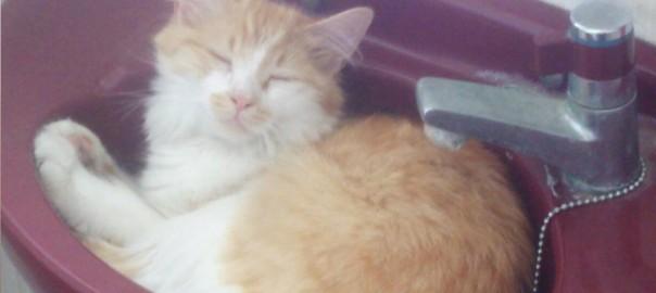 【今日のにゃんこ】大家族の末っ子!好奇心旺盛な子供ネコ「ももちゃん」