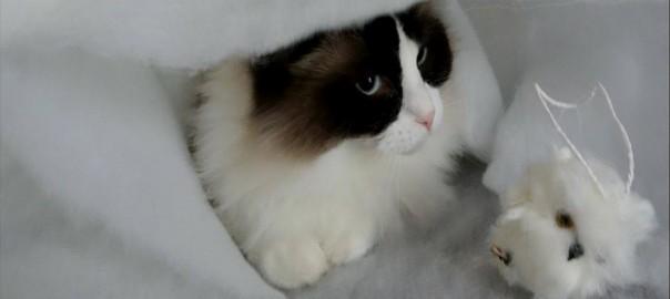 【今日のにゃんこ】ネコもこの時期はしゃいでる?おてんばなオランダ娘の「ティモちゃん」(動画あり)