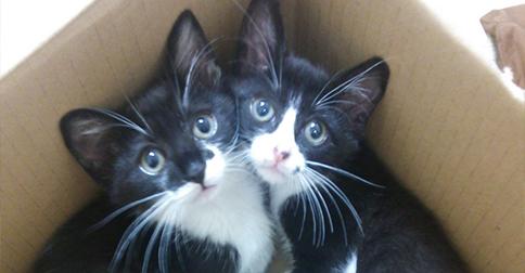 【今日のにゃんこ】二匹は強い絆で結ばれている!姉妹ネコの「エルモちゃん」と「エイミーちゃん」