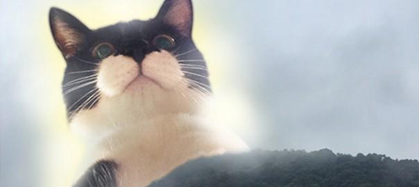 【今日のにゃんこ】大きさは変幻自在!ハイテクを使いこなすネコ「メチャちゃん」