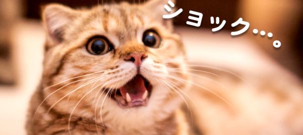 【にゃんてこった】おやつの引き出しをようやく開けた猫にまさかの結末が...