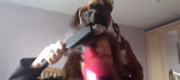 絶対に髪を乾かしたい女性vs乾かさせたくない犬(00:42)