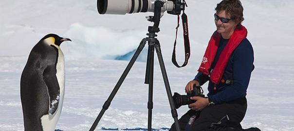 南極のペンギンたちが人懐っこすぎて可愛い