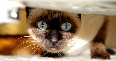 2015年の新ドラマ候補「ネコさんは見た」(画像8枚)
