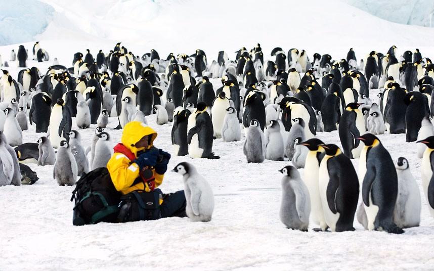 「ペンギン 寄ってくる」の画像検索結果