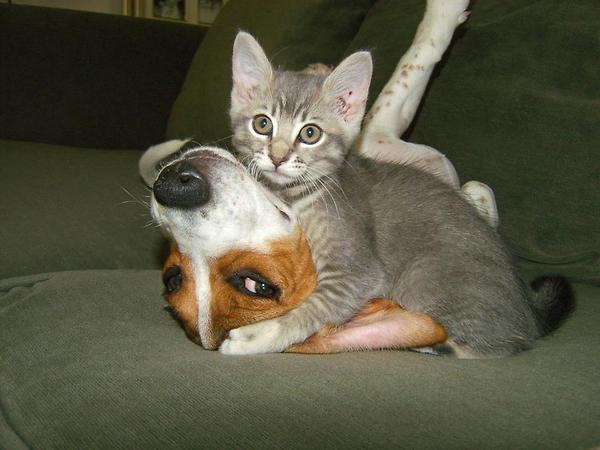 a.baa-cat-nokaut-dog