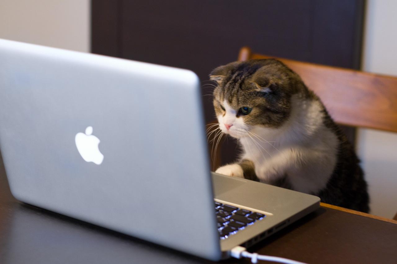 cat_using_computer-computer-cats