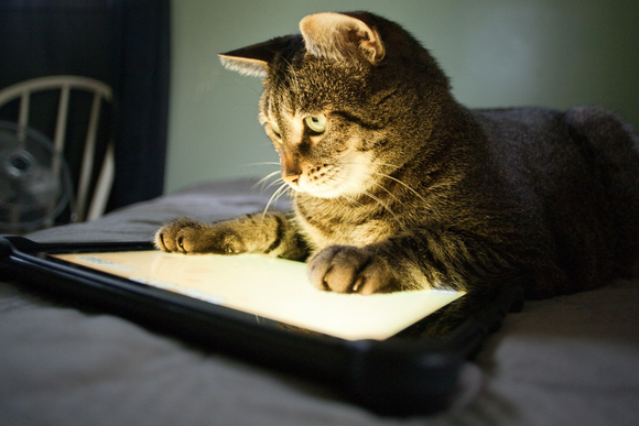 tablet_cat-100038149-gallery