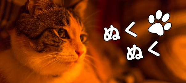 ネコが増える!増える!増える!コタツに入ってぬくぬく集会始めるにゃ(4:47)