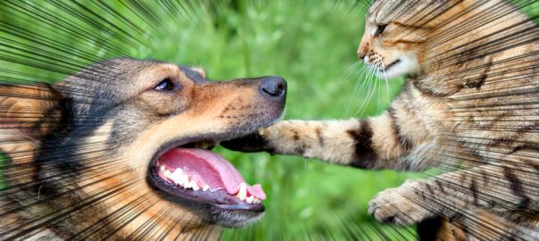 永遠のライバル。犬とネコの壮絶な14の戦い
