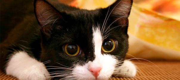 【ネコの惑星】人間社会転覆をもくろんでいるネコたち