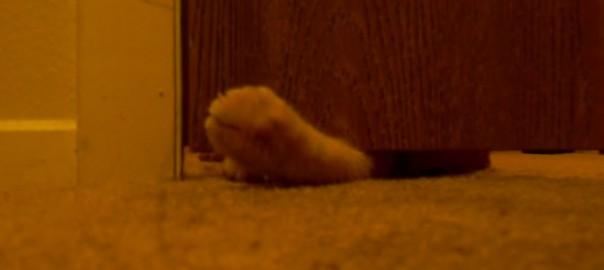 朝起きられない方必見!ネコとドアについている「ビロローン」を使った「にゃんこアラーム」で最高の目覚めが可能に(1:18)