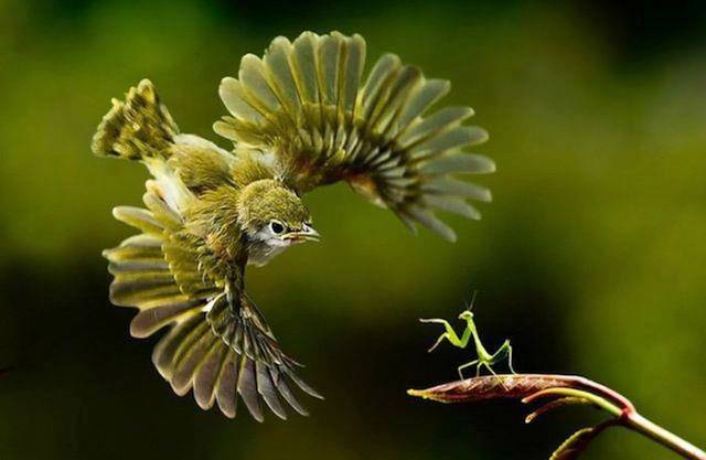 鳥とカマキリ
