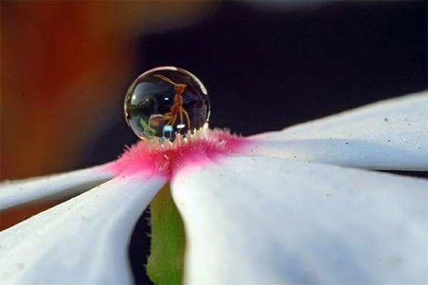 水滴の中のアリ
