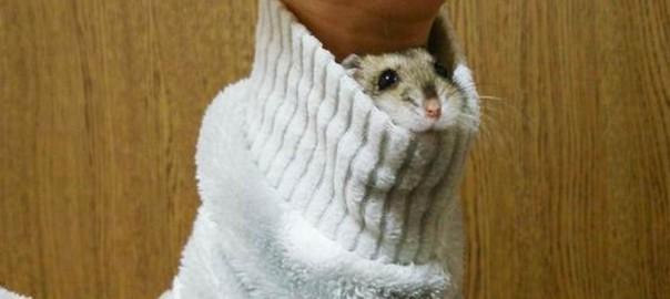か、かわいい... 「ハム袖」に日本全土が萌えた