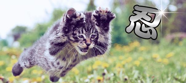 にゃにやつ!猫です。忍者にしか見えないにゃんこ16選