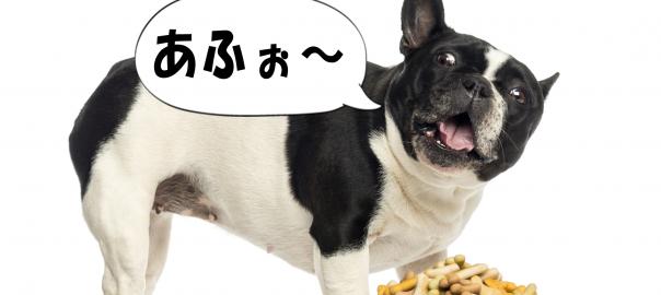ご主人のマネをしている犬が「アホー!」と言っているようにしか聞こえない