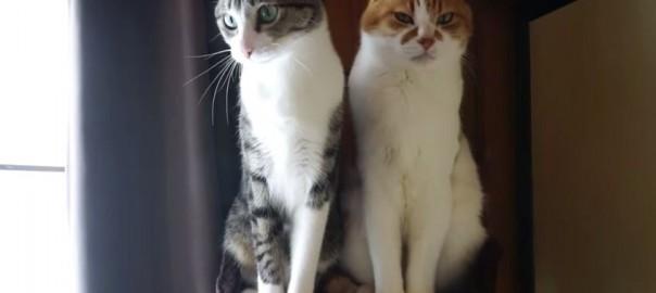 同じネコでもここまで違う!猫じゃらしへの反応が対照的すぎる2匹(0:46)