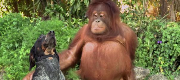 【犬と猿の友情?!】種を超えた友情を描いたCMに世界が感動(1:02)