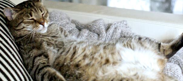 【にゃんだコレ】ネコをネタにした大喜利画像13選