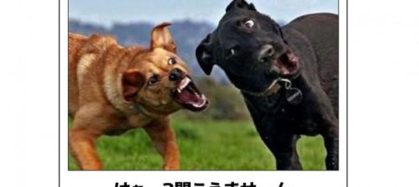 【猛犬注意】笑えて可愛いワンちゃんのボケて13選