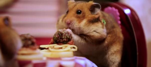 素敵なバレンタインをお届け!ハムスターのミニチュアデートがロマンチック(2:00)