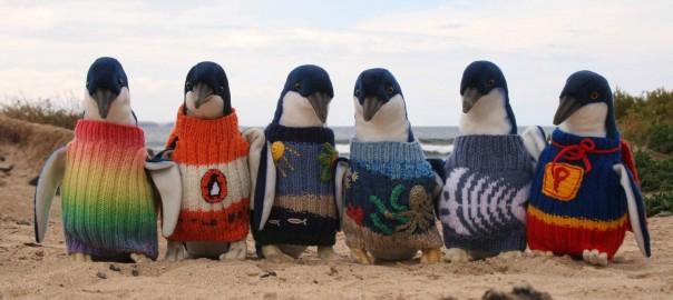 傷ついたペンギンのためにセーターを。109歳のおじいちゃんの優しさに感動