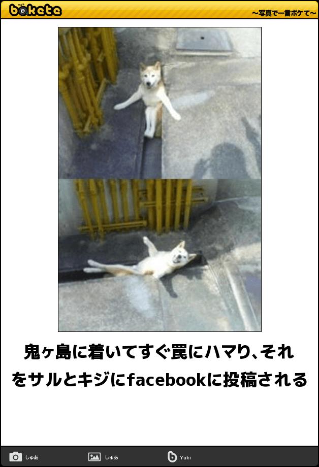 『動物』カテゴリのフリー画像一覧 ...