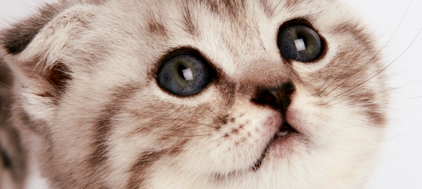 ネコと初恋は似ているとわかる12のワケ