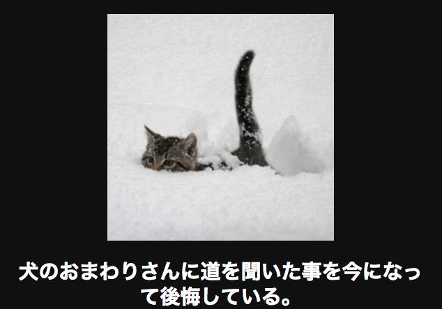 雪道を歩くネコ
