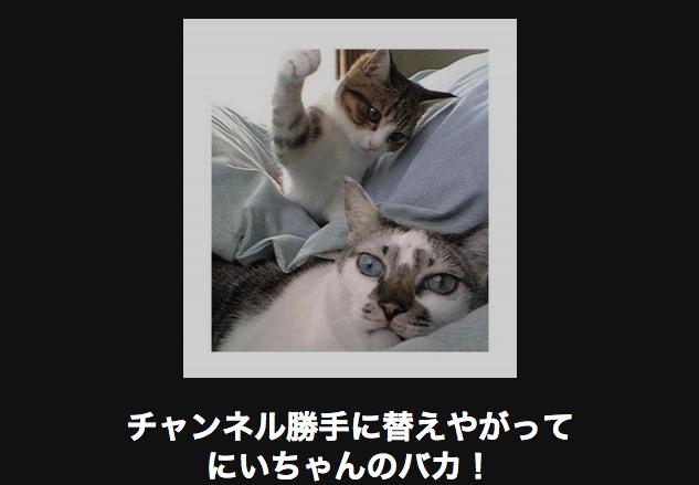 喧嘩を売るネコ