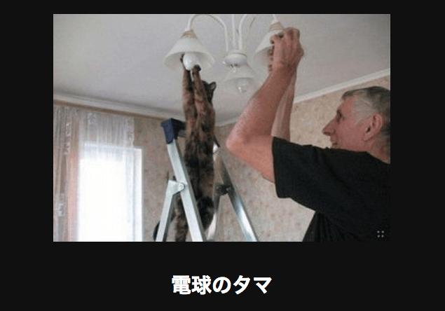 電球をかえるネコ