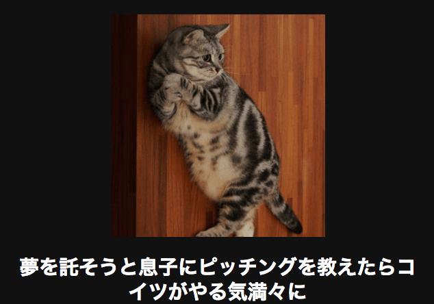 ピッチングフォームをするネコ