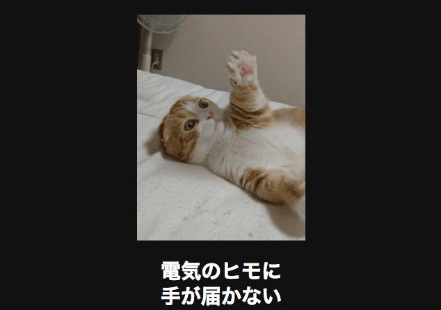 天井を仰ぐネコ