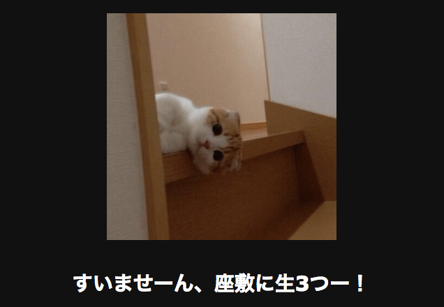 階段から覗き込むネコ