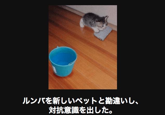 拭き掃除をするネコ