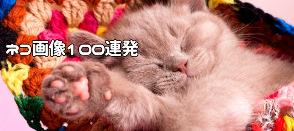 ネコ好きの、ネコ好きによる、ネコ好きのための、ネコ画像100連発!