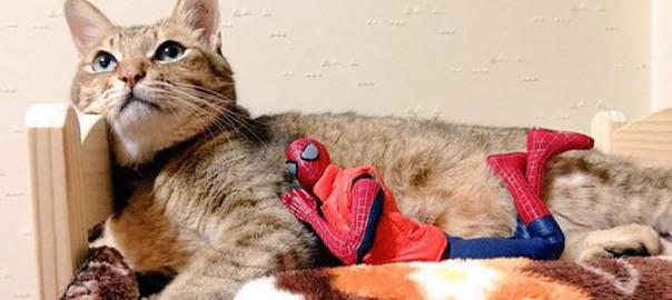 【ヒーローの休息】スパイダーマンとニャンコたちの癒やされる日常