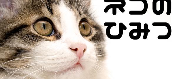 【閲覧注意】あなたの知らないネコの秘密18選