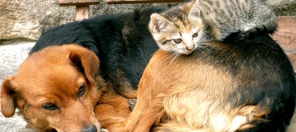 これも友情?ネコのベッドになってしまった犬たち