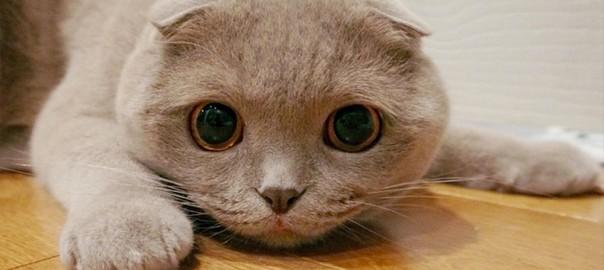 【今日のにゃんこ】モノを落とすのは本能にゃんだ。おてんばネコの「ミラちゃん」