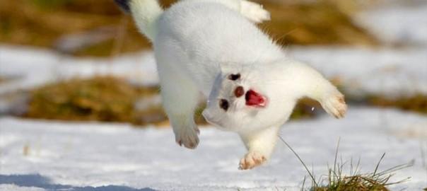祭りだ、祭り!雪が嬉しすぎてテンションMAXな動物たち