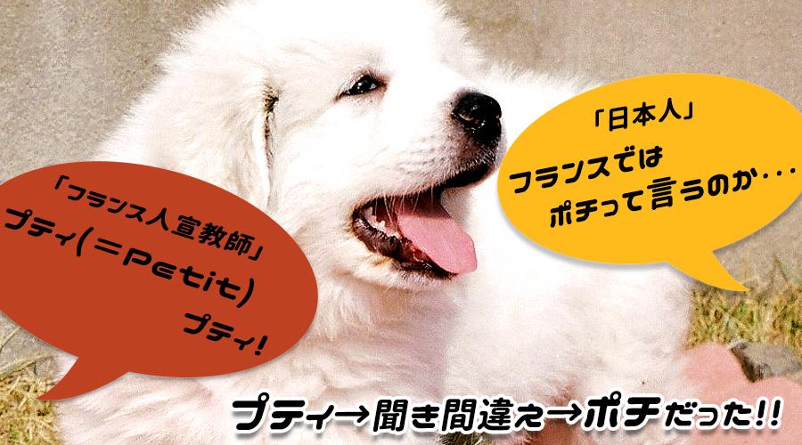 dog2 5